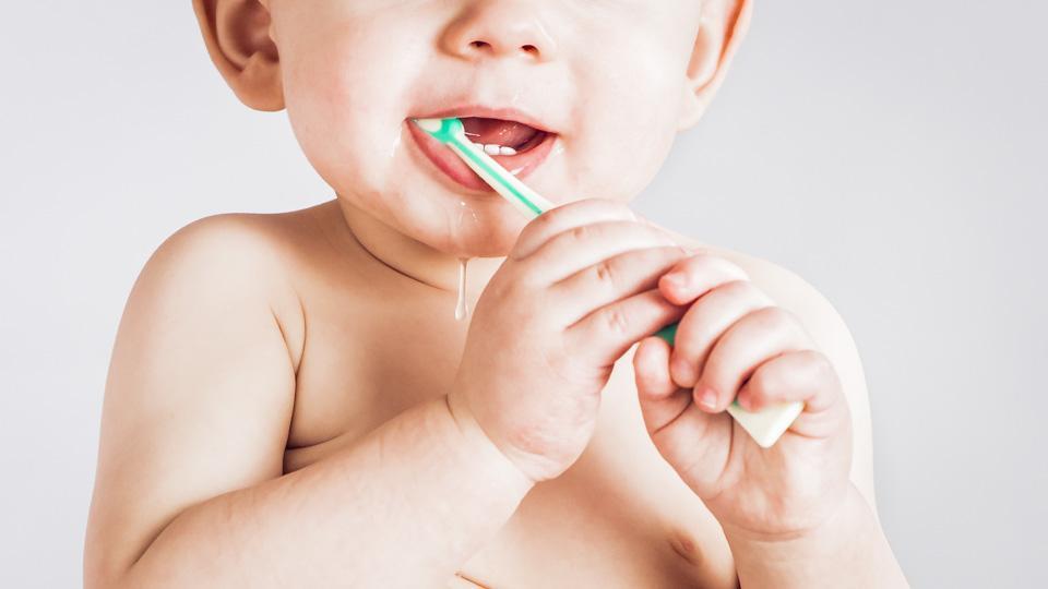 Sylkeä erittyy levossa vähintään 0,1ml minuutissa. Syljen erittymistä stimuloi etenkin syöminen. Lapsilla hampaiden puhkeaminen aiheuttaa huomattavaa syljen lisääntynyttä erittymistä. Kuva: © Webdento.